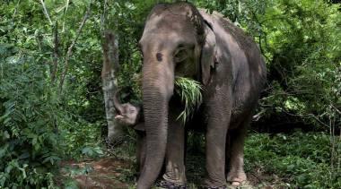india-elephant_759