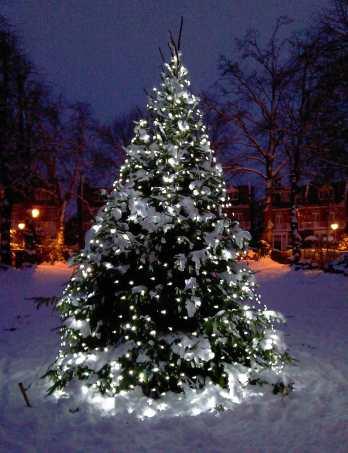 Outdoor-Christmas-Tree-White-LED-Lights-Snow.jpg